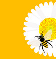 daisy flower with bee background vector image vector image
