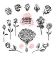Roses set Flower in sketch vector image