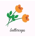 Buttercups vector image