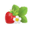 strawberry with leaves and flower vector image vector image