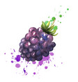 brambles with leaves splashes with watercolors on vector image vector image