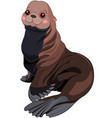 fur seal vector image