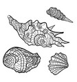 seashells shell pattern shell set coloring book vector image