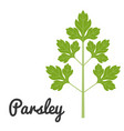 set of vegetable parsley vector image