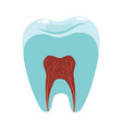 a healthy tooth in cut hygiene oral vector image