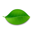 Green leaf vector image