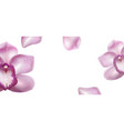 horizontal banner with purple orchid vector image