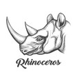 rhinoceros head vector image