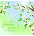 Decorative background with white blooming trees vector image
