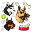 icons colored dog shepherd husky doberman and a vector image
