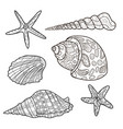seashells shell pattern shell set coloring book vector image