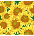 Floral seamless background with sunflowers vector image