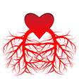 heart and the veins