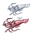 squid seafood sea animal isolated sketch vector image vector image