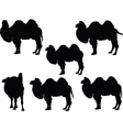 camel collection vector image