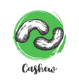 cashew nuts vintage hand drawing nut vector image vector image