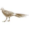 engraving antique pheasant female