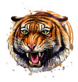 growling tiger color hand-drawn portrait vector image vector image
