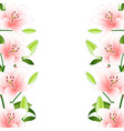 pink lily border on white background vector image vector image