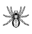 spider in engraving style halloween theme design vector image vector image