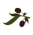 olive fruit plant icon vector image