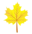 maple autumn leaf vector image vector image