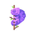 purple chameleon sitting on a tree branch vector image vector image