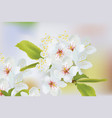spring blossom flowers branch spring delicate vector image vector image