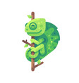 green chameleon sitting on a tree branch vector image vector image