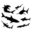 sharks collection vector image