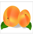 Two ripe peach fruit with leaves vector image vector image