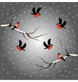 Bullfinch on branch snow merry christmas gray vector image vector image