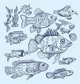 fish sketch set vector image vector image