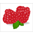 fruits of raspberry on white background vector image
