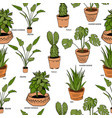 color houseplants pattern vector image vector image