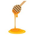 dipper and honey vector image vector image