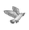 dove with olive branch sketch vector image vector image