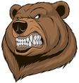 Ferocious bear vector image vector image