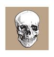 hand drawn human skull anatomical model sketch vector image vector image