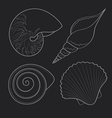 Graphic sea shells vector image