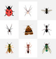 set of bug realistic symbols with wasp fly sting vector image