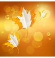 Autumn abstract nature background vector image vector image