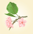Sakura pink flower with leaves Spring background vector image