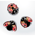 Three red ladybugs vector image vector image