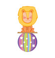 cute lion circus in plastic balloon vector image