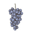 hand drawn colorful grapes branch vector image