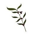 olive fruit plant stem icon vector image