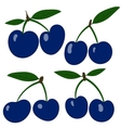plums Collection blue plum fruits vector image vector image