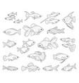 popular aquarium fishes vector image