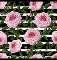 seamless pattern with pink english roses vector image vector image